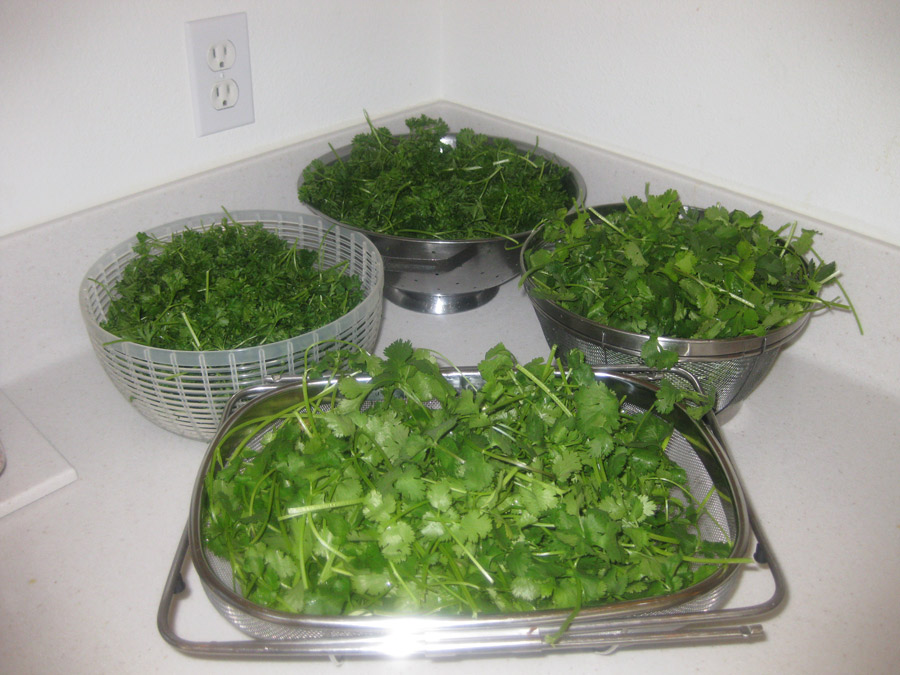 Straining the parsley and cilantro